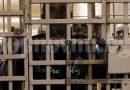 Анета Генова: А властите мълчат за изтезанията в българските психиатрични болници…